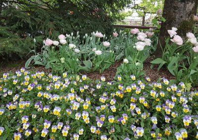 europapark-fleurie